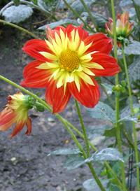 España en flor